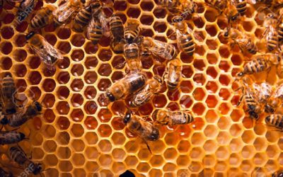 Remove Your Insects, Save The Bees!