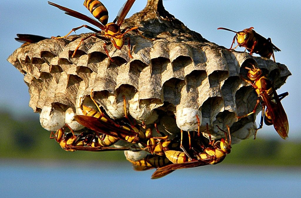 Wasps Are Bees On Steroids!!!