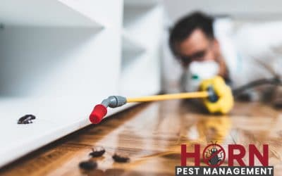 Preventing Damage To Your Home Caused By Pests
