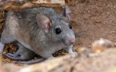 Common Winter Pests and the Solutions
