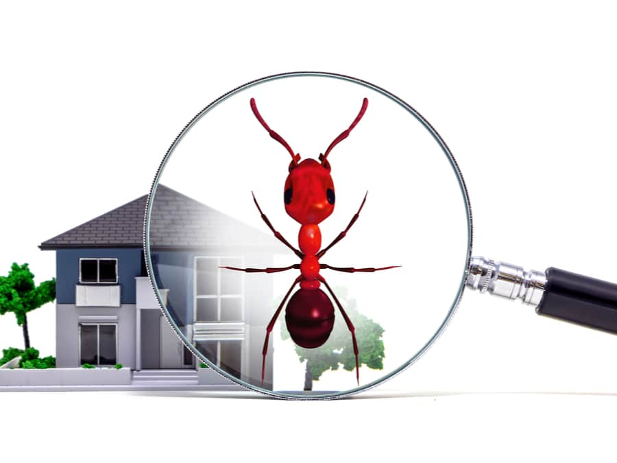 Termite inspections: Early detection is critical